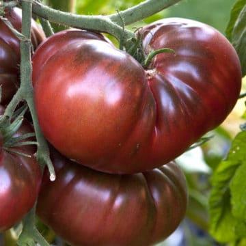Tomates noires de crimée 1kg