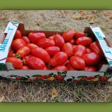 Tomates à cuire 3kg